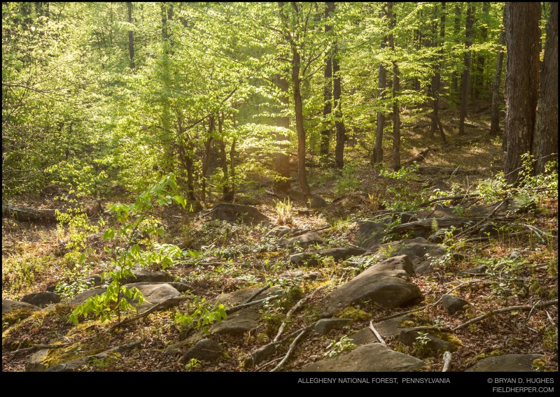 Pennsylvania Timber Rattlesnake Habitat